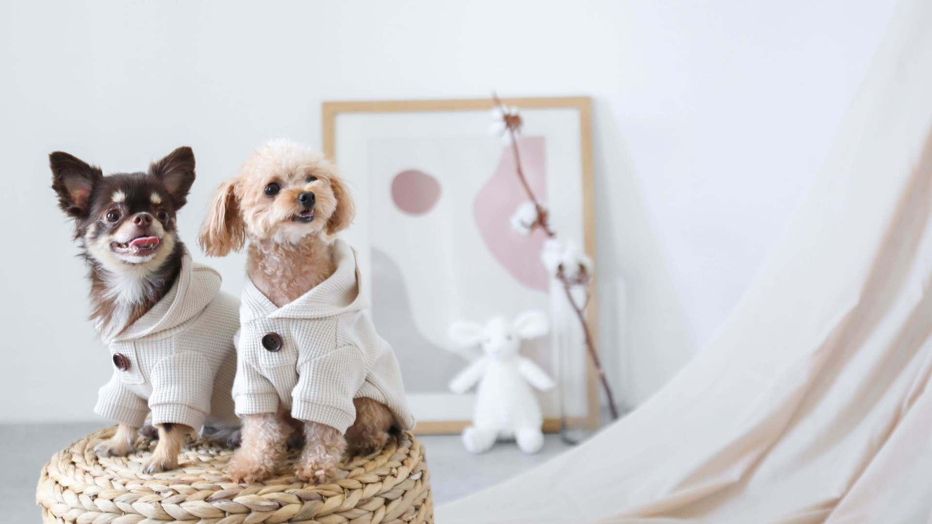 犬服ブランド〝monchéri〟デザイナー募集!!のカバー写真